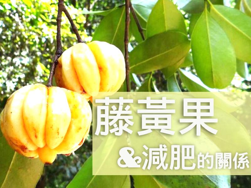 藤黃果&減肥的關係
